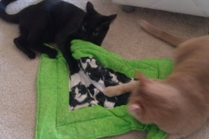 Olver and Ramona show how to share a Pootie Pad